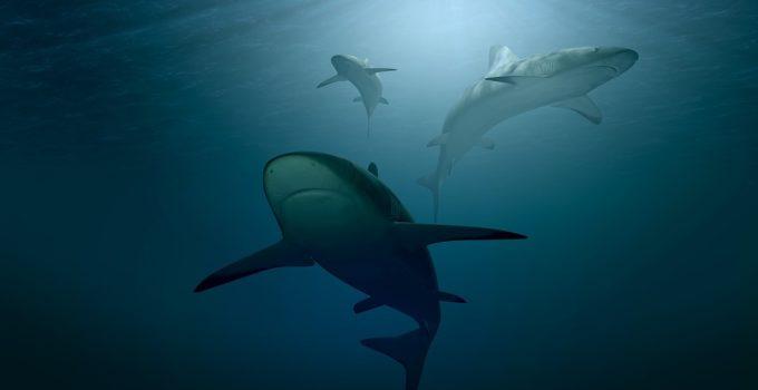 Unterwassergewehr